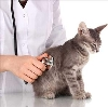 Ветеринарные клиники в Сладково